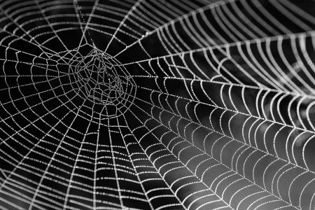 How To Clean Spider Webs From House Sliding