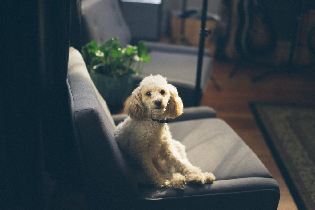 How To Clean Dog Pee From A Couch